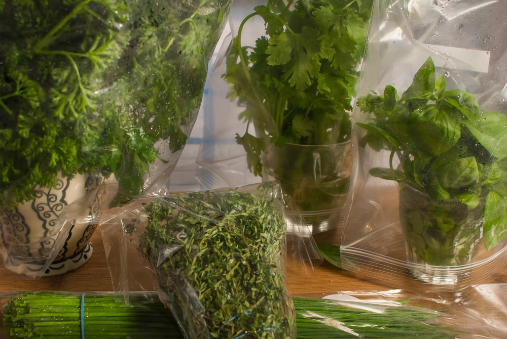Fresh herbs are great - but why is it so difficult to keep them fresh...